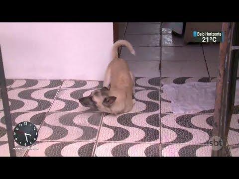 Idosa luta por prótese para seu cachorro, que nasceu sem 2 patas | SBT Notícias (20/11/17)