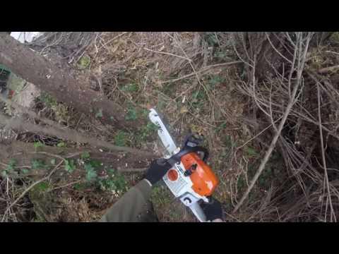 bomen weghalen met