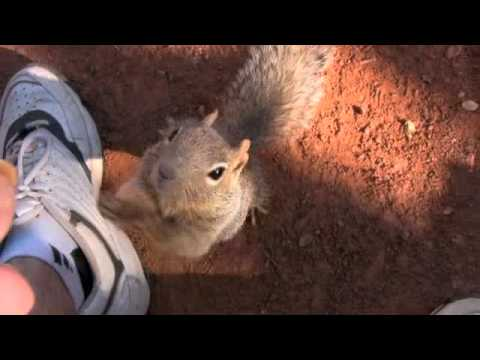 Grand Canyon Squirrel