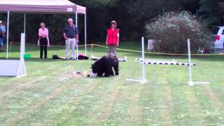 Black Russian Terrier Obedience Training Utility Level Ckc