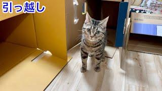 引っ越し作業が気になりすぎて一緒に参加しにきてしまった猫w