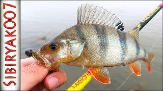 Окунь на спиннинг летом. Первая рыбалка на недорогой спиннинг для джига.