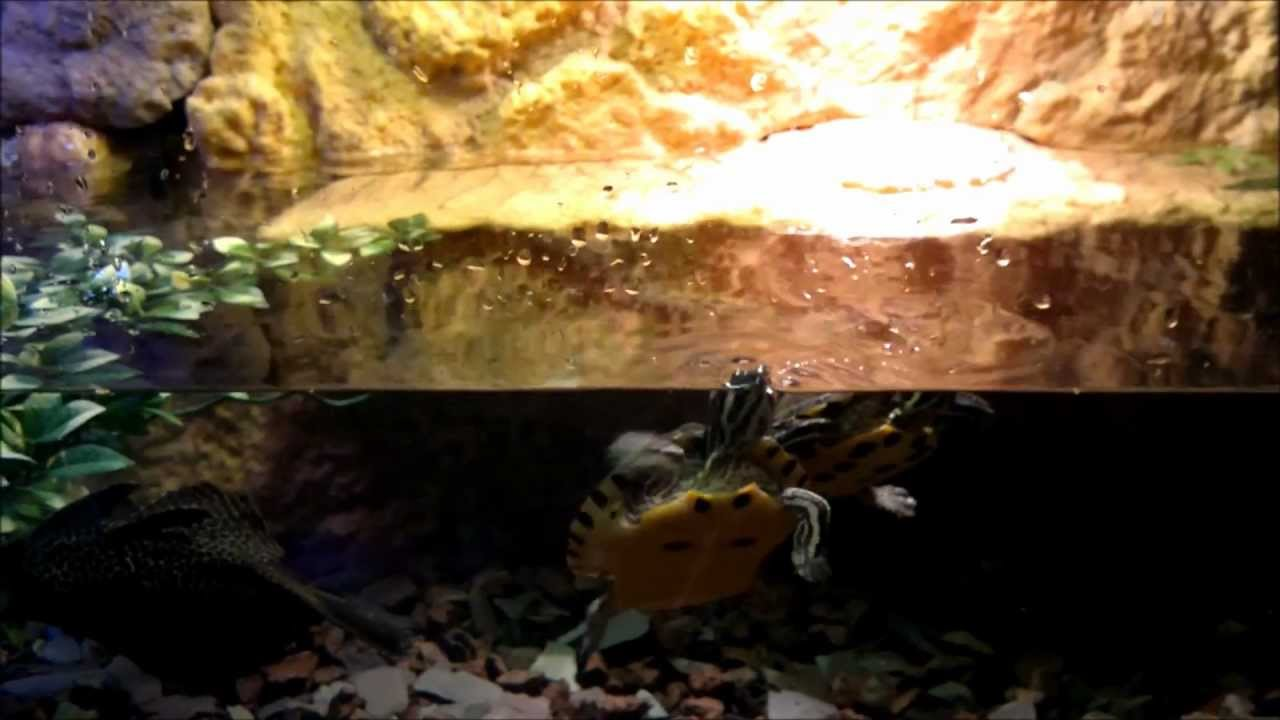 BEST TURTLE TANK SETUP!! FACT!! A tank thats actually suited for ...