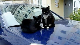 2 Stray Cats Bask on The Hood