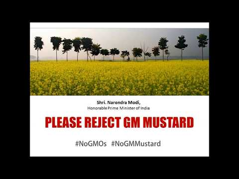NoGMMustard Movie