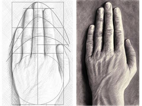 comment dessiner une main les proportions youtube