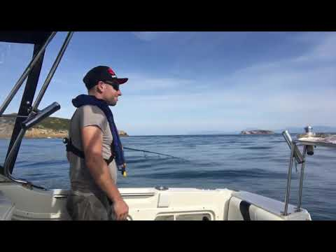 Solo Kingfish Mission - Wilsons Prom April 2018