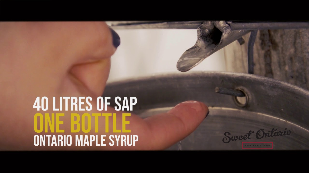 Ontario Maple Syrup Producers Association - Sweet Ontario Maple