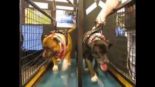 Top Dog Walking Machines Sun Canine Stars Gold Coast Pet Expo