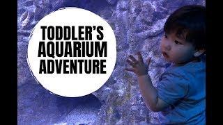 TODDLER'S AQUARIUM ADVENTURE | AMWF FAMILY Video