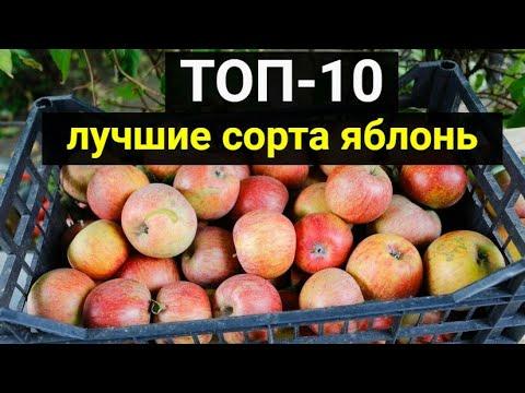 ТОП-10: лучшие сорта яблонь – описание, фото
