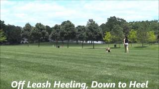 Off Leash Heel: Dog Training, Northern New Jersey