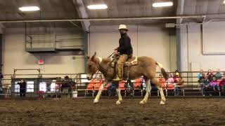 What is the difference between horses and mules?