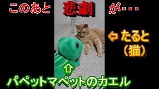 【衝撃】カエルと猫の癒し動画(を撮るはずだったんです)【悲劇】 thumbnail