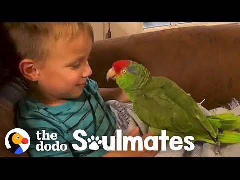 Lisa St. Regis - A Boy and His , Bird?