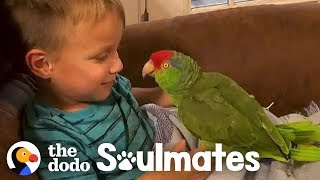 Parrot Follows Her Favorite Kid Everywhere | The Dodo Soulmates