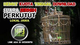 PERKUTUT LOKAL  ALAM AMPUH | free download mp3 masteran perkutut