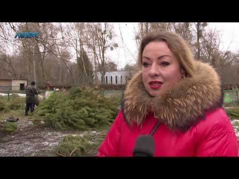 ТРК Аверс: Новорічні ялинки чекають у Луцькому зоопарку