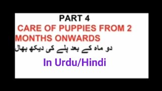 PART 4. Healthy Puppy series. CARE OF PUPPY till adulthood, Dog health, Dog vaccination by Raza Ali