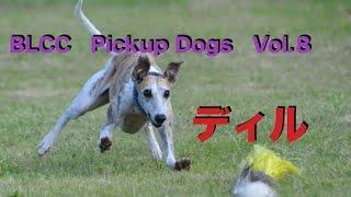 BLCC Pickup Dogs Vol.8 ウィペット ディル.