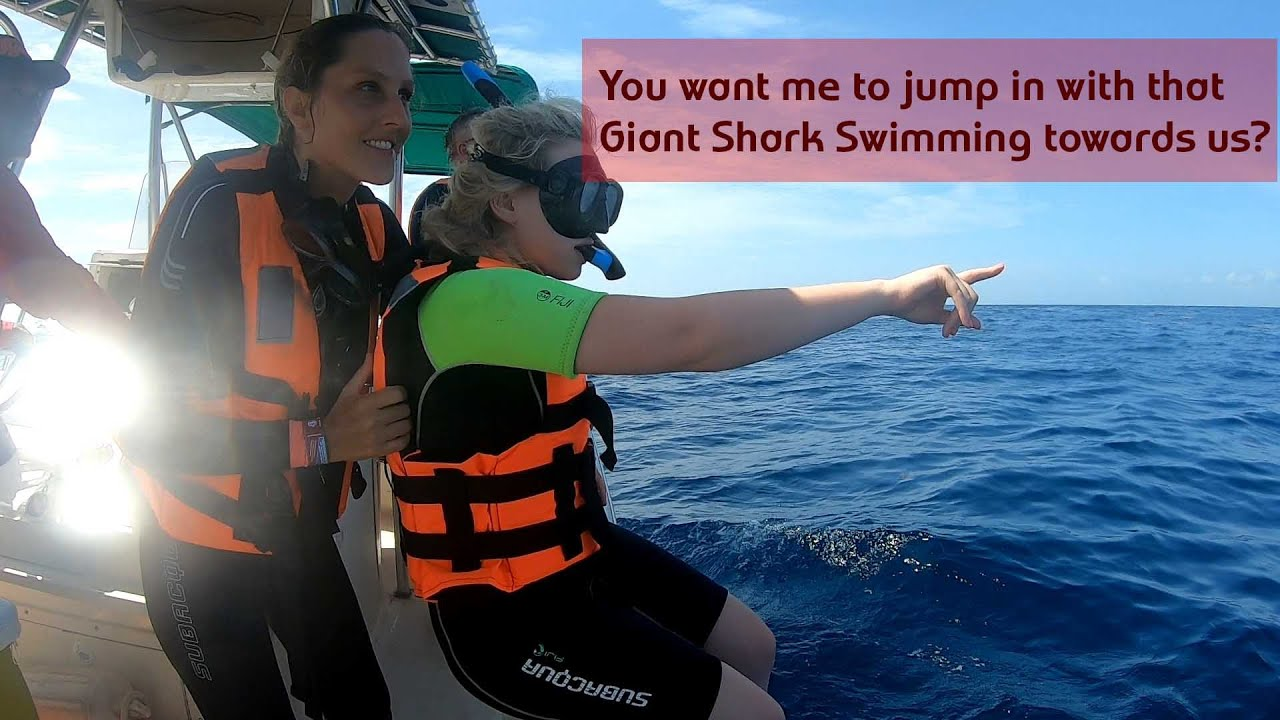 Amazing Whale Shark Snorkel Tour