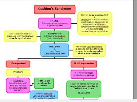 USMLE ALGORITHMS: Cushing Syndrome