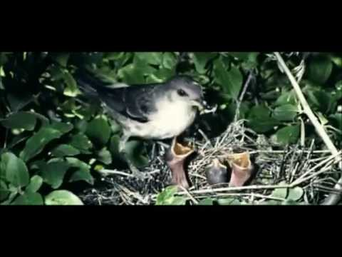 Punjab De Alope Ho Rahe Panchhi/Extinct Birds Species In Punjab (Birds Documentary)