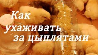 Уход за цыплятами, как выращивать цыплят, как сделать кормушку и поилку для цыплят.