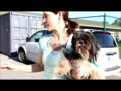 48 Dogs Rescued from Puppy Mill/Hoarding Situation