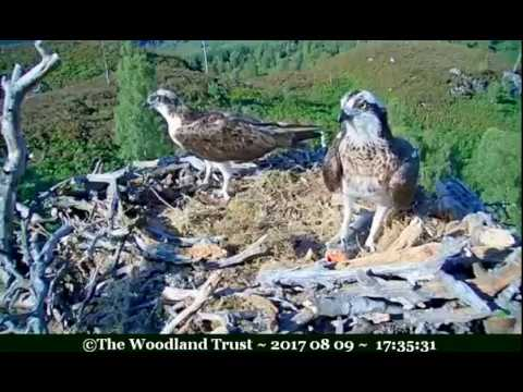 Aila collects fish from Louis, did she take it to Lachlan? - ©Woodland Trust, Arkaig