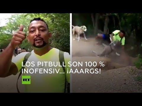 Un alegato en favor de los perros peligrosos acaba con un final sorprendente