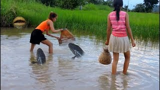 Video Amazing Fishing at Pailin Province   Cambodia Traditional Fishing   Khmer Net Fishing 2017