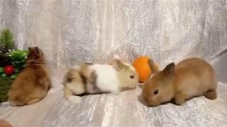 Декоративные кролики малыши Орёл Воронеж