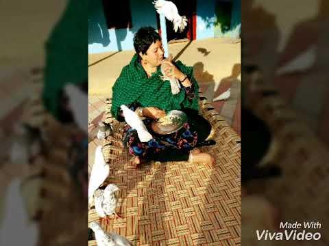 Jai maiya bhagwan ji ..jai alisha maiya...
