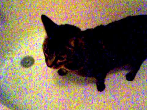 Cat Bloopers 1.MOV