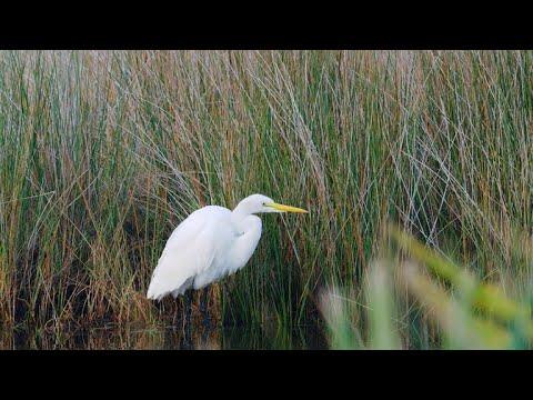 Nature: Merritt Island