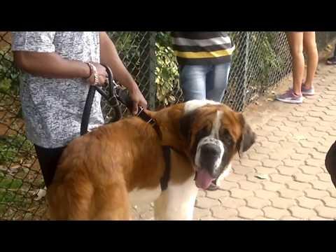 Dog Show at Cubbon park - Bangalore / Half Boiled Updates
