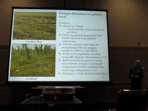 Stunz: Population genetics and gene flow of the arctic moist tundra sedge, tussock cottongrass