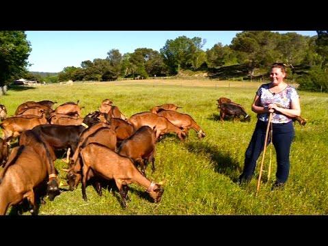 Terroir : la petite maison du chèvre dans la prairie