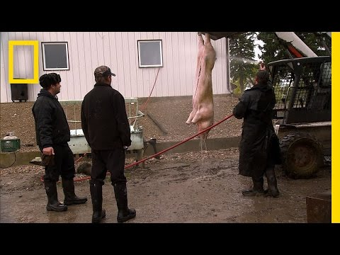 A Pig for the Party | American Colony: Meet the Hutterites