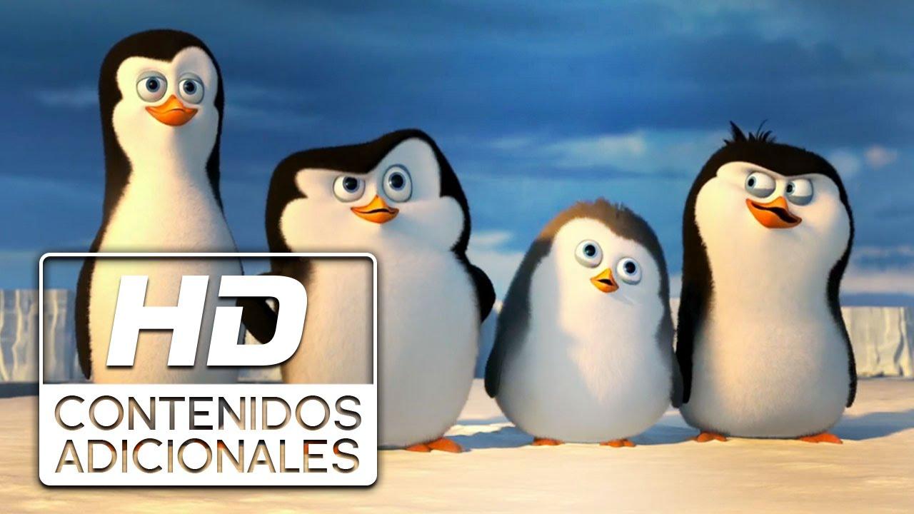 Cute Penguin Wallpaper Cartoon Los Ping 252 Inos De Madagascar Quot Conociendo A Los Ping 252 Inos