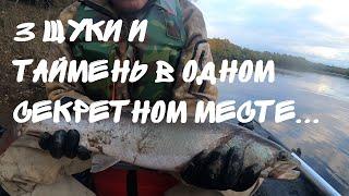 Рыбалка 3 щуки и таймень в секретном месте Рыбалка на реке Бикин в октябре на щуку Поймали