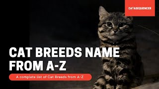 Cat Breeds Name AZ : A complete list of Cat Breeds from AZ , Origin and Characteristics