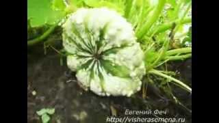 Патиссоны. Семена почтой http://fechshop.ru(, 2013-09-17T06:16:48.000Z)