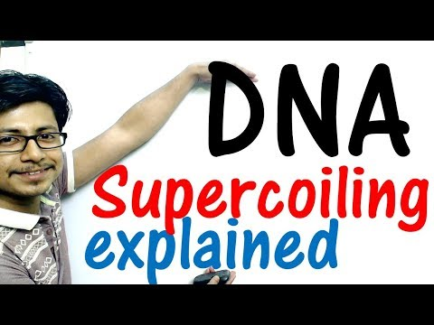 DNA supercoiling explained