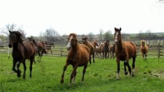 Skaryszew uratowane  konie