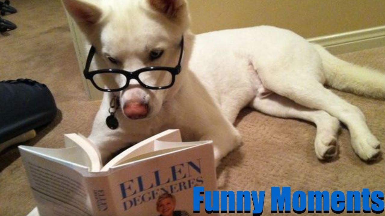 Funny Animals 🐱🐶🐦Funniest & Cutest Animals Videos 💙😂❤️ Cute & Funny Animals🐱
