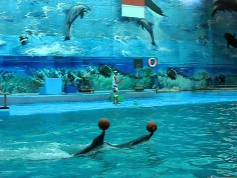 Suoi Tien (HCMC): dolphin show