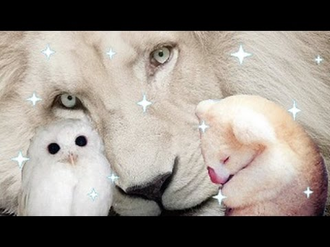 Amazing And Rare Albino Animals In The World YouTube - 22 adorable albino animals without colour