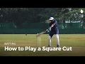 How to Play a Square Cut | Cricket